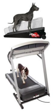treadmill for dogs dog exercise treadmill
